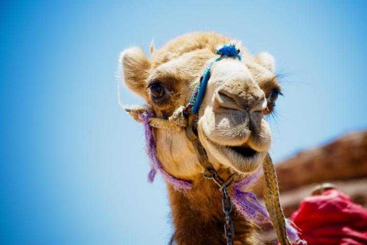 last minute singlereisen ägypten