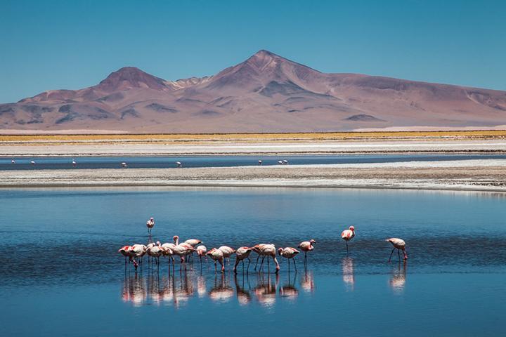 Die Atacama W 252 Ste In Chile 5 Highlights